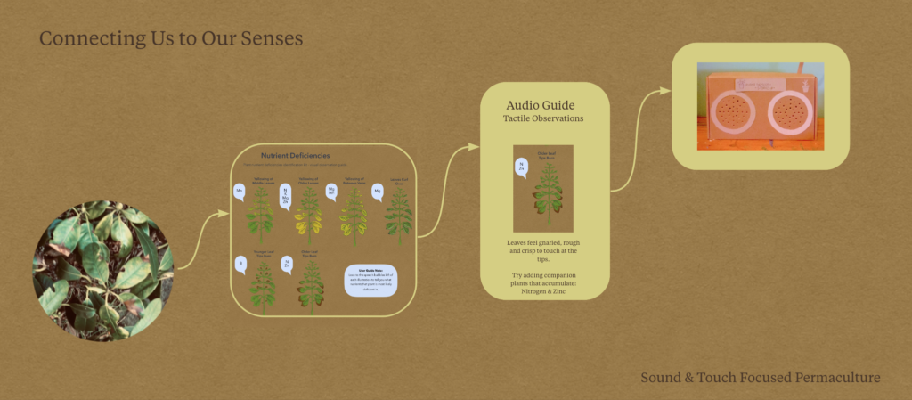 A design iteration flow chart map. The first image shows unhealthy leaves in the garden. The second shows a visual nutrient guide for unhealthy plants. The third depicts information to be read aloud by a screen reader or audio guide ' Tactile Observations for Older Leaf Tip Burn: Leaves feel gnarled,rough and crisp totouch at the tips. Try adding companion plants that accumulate: Nitrogen & Zinc' The fourth image depicts a prototype of a tactile audio manual with inbuilt speaker. This also has scope to be compatible in future iterations with the RNIB tactile MP3 player or Connect Radio Show.